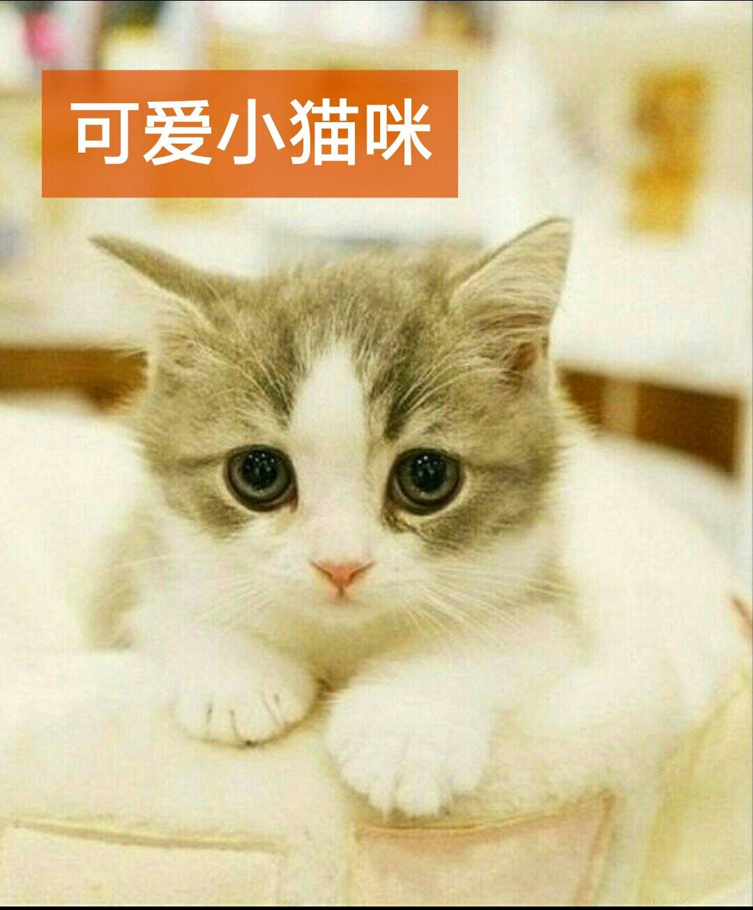 国际手势 可爱小猫咪