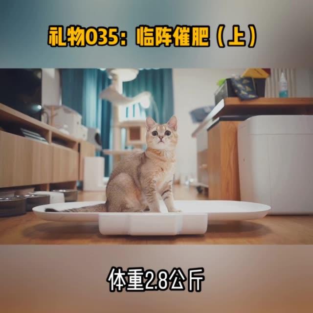 礼物035:临阵催肥(上) 喵星人无水印高清好看视频