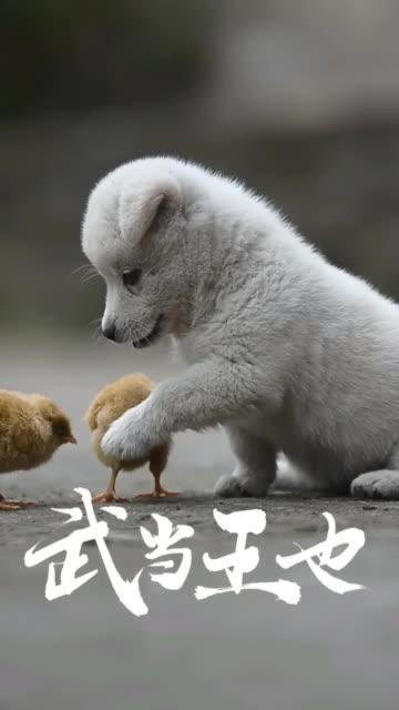 汪,汪汪汪,饭团小Q来啦,你们在干嘛呢?快给我一起来玩啊。汪星人 宠物 宠物大联盟 \n\n❤饭团小Q帮你脱单❤\n\n