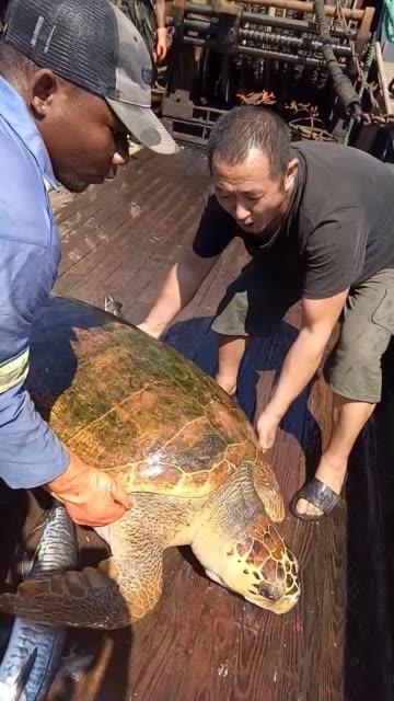 平安快乐龟保平安不管你出行有多远都会平安归来????????????无水印高清好看视频