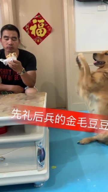 今天拍点啥 汪星人 宠物 家有狗狗 萌宠 大家一起拍视频、选择今天拍点啥可以参加官方抽流量活动无水印高清抖音电脑版